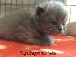 Peyredragon