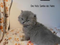 One Note Samba - 1 mois